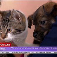 Кіт Люк та пес Чак чекають на своїх господарів