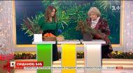 Наталья Подлесная показала, как сделать новогодний букет своими руками