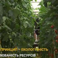 У Брюсселі на даху супермаркету вирощують овочеві плантації