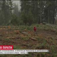 Мораторій на вирубування пралісу спровокував лісорубів зрізати побільше унікальних дерев