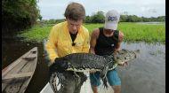 Полювання на риб-гігантів та крокодилів в Амазонці