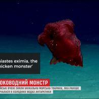 Австралійські вчені зняли унікальну істоту, яка раніше не зустрічалася у Тихому океані
