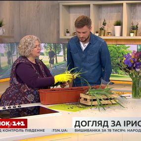 Наталя Підлісна розповіла, як правильно ділити карликові іриси