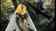 Пригоди риболовів Амазонки та найсмачніша риба в житті Комарова