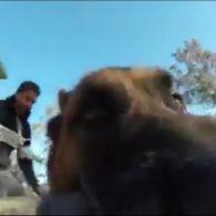 Собака зняв свою втечу на камеру