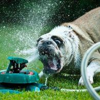 Як врятувати домашніх тварин від спеки - поради та рекомендації