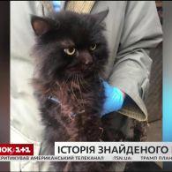 Лучанка знайшла свого кота, якого втратила п'ять років тому