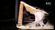 Нічне полювання на крокодила в Амазонці
