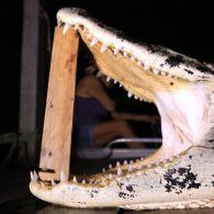 Ночная охота на крокодила в Амазонке