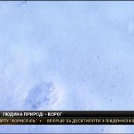 У Чорнобильській зоні поступово відновлюється природа