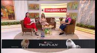 У студії Сніданку власниця котів породи селкірк-рекс Лариса Іваненко та її улюбленець