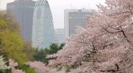 Світ навиворіт 9 сезон 1 випуск. Японія – країна сакури і трудоголіків