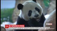Поселення на півдні Китаю потерпає від візитів слона