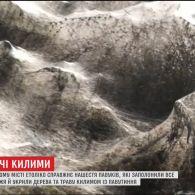 Павуки встелили грецьке узбережжя величезними килимами з павутиння