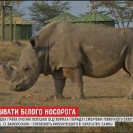 Вчені відтворили гібридні ембріони рідкісного північного носорога
