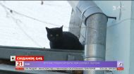 Врятуй Чучу: як пожежники рятували кота, який місяць не може злізти з даху