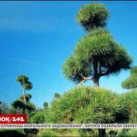 Скільки коштують формовані дерева і як на них зекономити - Зелена ділянка