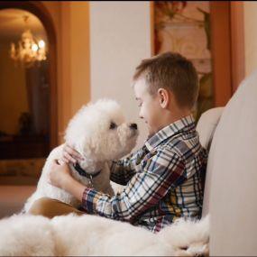 Витончені та розумні – собаки породи бішон фрізе