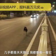 Китайський Хатіко: вірний пес майже три місяці чекає господиню на місці її смерті