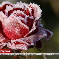 Скільки коштує укриття рослин від морозу і як правильно укривати троянди - Зелена ділянка