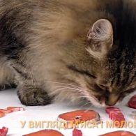 Вуха, лапи і хвости: сьогодні відзначається Всесвітній день кішок