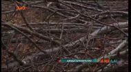 Місце де зникають люди: одне із найзагадковіших місць планети - ліс Хоя Бачу