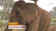 Будні найстарішого слона на планеті – дивіться Світ навиворіт