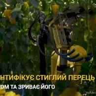 Робот-аграрій: голландські вчені представили машинного помічника, який збирає перець
