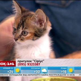Полуторамесячные котята Люк и Глаша ищут хозяев