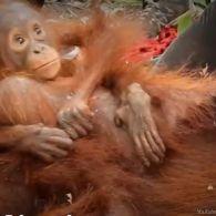 Жертви пальмового масла