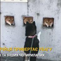Визирни в віконечко: японець зробив у паркані 18 отворів для тріо собак, яким нудно вдома