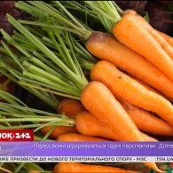 Монетизація субсидій, дешева морква та експрес до аеропорту Бориспіль – економічні новини