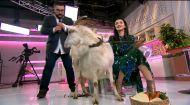 """Сніданок після """"Сніданку"""": Валентина Хамайко розповіла про особисте і подоїла козу"""