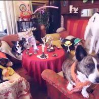Как живут собаки знаменитостей