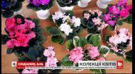 Сколько стоит коллекция цветов и в каком уходе она нуждается - Зеленый участок