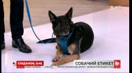 Як правильно поводити себе із собаками та про що мають пам'ятати їхні власники - кінолог Владислав Плахтій