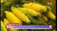 Як обрати смачну кукурудзу і не переплатити