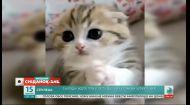 Обзор видео домашних любимцев зрителей