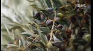 Правила завтрака на Кипре: изготовление оливкового масла и вкусности из ослиного молока