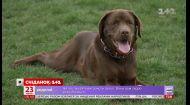 Почему чешские города - комфортная среда для собак и их владельцев