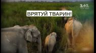 Всеукраїнський марш за права тварин 15 вересня о 12:00 у парку ім. Тараса Шевченка