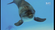 Дмитро Комаров познайомився з рожевими прісноводними дельфінами Амазонії