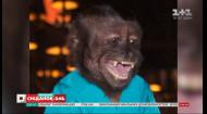Известные обезьяны с впечатляющими способностями