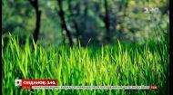 Скільки коштують газони та яких видів вони бувають — Зелена ділянка