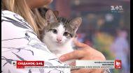 Троє кошенят шукають затишний дім