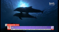 Заботливые и дружелюбные: какие интересные факты стоит знать о дельфинах
