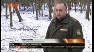 На Волині у лісництві браконьєри застрелили сімох самок лані