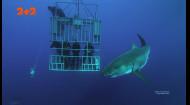 Погружение с дикими животными: опасные скаты, морские львы и кровожадные акулы