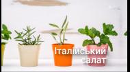 Сажаем и выращиваем в домашних условиях набор растений «Итальянский салат» — Сад на подоконнике