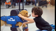 Тварини на службі: як і де працюють брати наші менші
